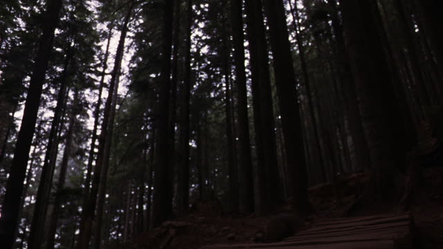 WIDE ANGLE FROM LOW POV OF SHADY FOREST OR WILDERNESS WITH BIKE PATH MADE OF LOGS. TEENAGED BOY RIDES DOWN HILL THROUGH TREES TOWARDS POV ALONG BUMPY PATH.