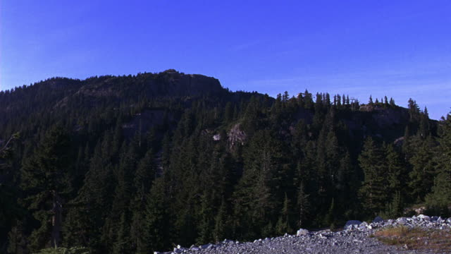 WIDE ANGLE OF MOUNTAIN WITH PINE TREES, BLUE SKY. SEE ROCKY HILLSIDE AND FORESTS IN WILDERNESS. COULD BE ROCKY MOUNTAINS. NATURE.