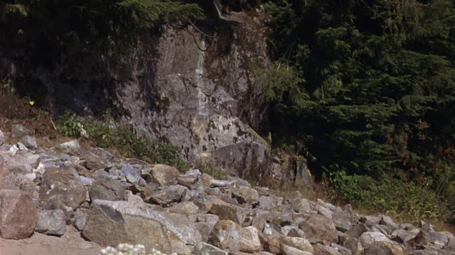vídeos de stock e filmes b-roll de close angle of rocky hillside in forested mountain wilderness. see lower half of green and white rv drive right to left over rocky path. - pine