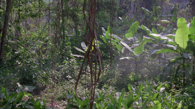 medium angle of forest or jungle. vines, trees. - vietnam stock videos & royalty-free footage