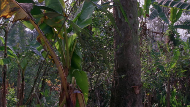 hand held  of forest or jungle. vines, trees. - vietnam stock videos & royalty-free footage