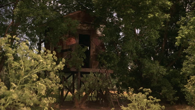 """zoom in on wooden tree house made of wood planks surrounded by large trees with green leaves. metal sign next to doorway: """"fire alarm."""" window inside tree house seen through doorway. ladder leaning against stoop. - treehouse stock videos & royalty-free footage"""