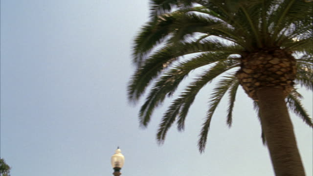 vidéos et rushes de tracking shot of palm trees in santa monica on ocean avenue. could be los angeles or somewhere else in southern california.  blue sky, near the beach. - plan en travelling