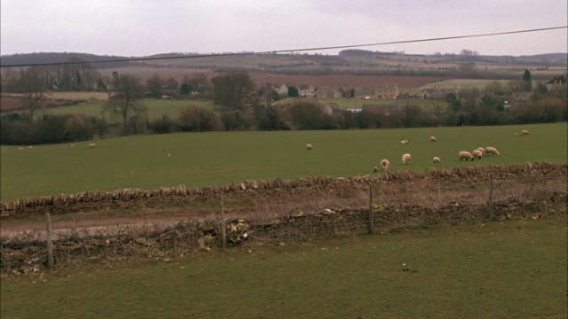 WIDE ANGLE OF SHEEP IN PASTURE FIELD WITH FENCE. RANGE ROVER DRIVING PAST FIELDS. COUNTRYSIDE. FLOCKS. RURAL AREAS. CARS.