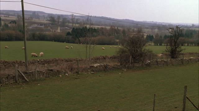 PAN RIGHT TO LEFT OF SHEEP IN PASTURE FIELD WITH FENCE. RANGE ROVER DRIVING PAST FIELDS. COUNTRYSIDE. FLOCKS. RURAL AREAS. CARS.