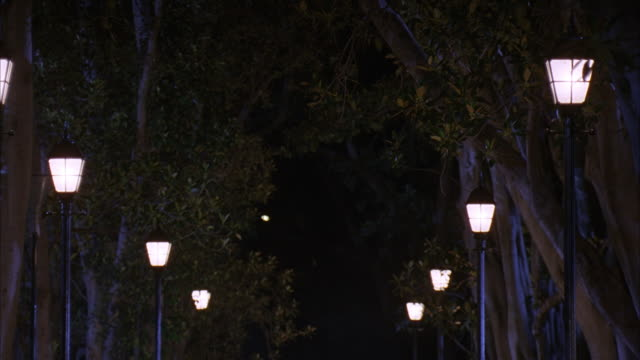 vídeos de stock, filmes e b-roll de medium angle of two rows of  trees and lamp posts in park, along unseen path.  illuminated street lights turn off one by one. - poste
