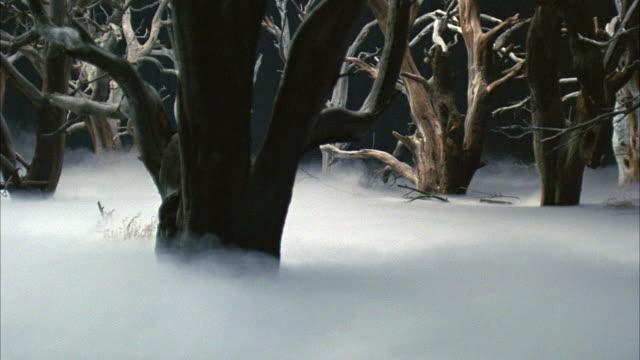 vídeos de stock e filmes b-roll de medium angle of fog covered swamp.  dead trees stick out of stagnant water. - lamaçal