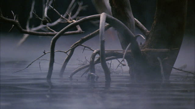 close angle of fog covered swamp.  dead trees stick out of stagnant water. - bog stock videos & royalty-free footage