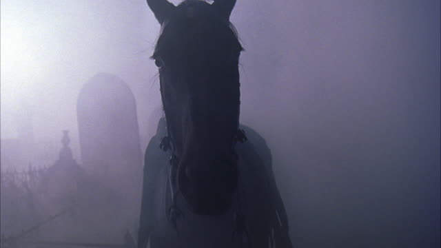 PULL BACK THROUGH HEAVY FOG TO HORSE WALKING TOWARDS POV THROUGH  MISTY EERILY LIT GRAVEYARD, MELBOURNE REGULAR CEMETERY. HORSE HAS REINS, WEARS SADDLE WITH RIFLE IN HOLSTER, HAS NO RIDER.