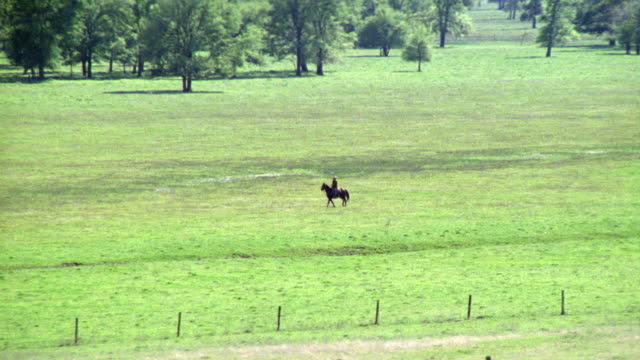 beautiful green farmland ranch land country. one man rides black horse through green field. see barn stable ranch in bg. cattle grazing. - texas stock videos & royalty-free footage