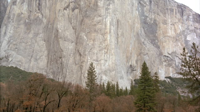 medium angle dense  pine and fir trees at base of el capitan in yosemite valley, yosemite national park. pan up to top of mountain. - yosemite national park stock videos and b-roll footage