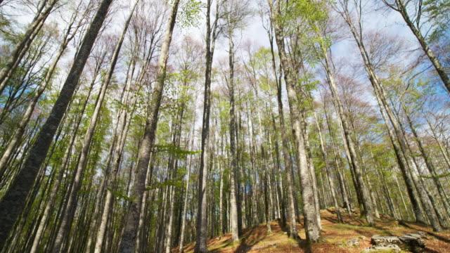 bokskogen - lång längd bildbanksvideor och videomaterial från bakom kulisserna