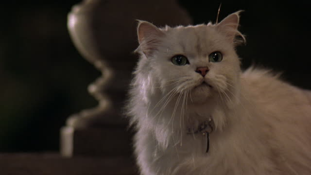 MEDIUM ANGLE OF WHITE PERSIAN CAT WITH GREEN EYES. SEE CAT MEOW. SEE BLUE COLLAR WITH RHINESTONES. SEE BALUSTRADE IN BACKGROUND.