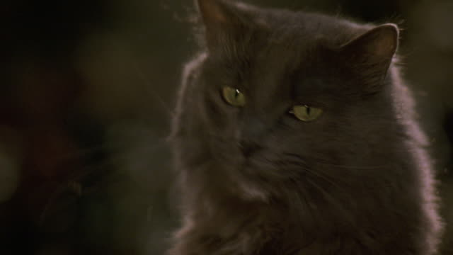 close angle of head of dark grey or black cat with green eyes. see cat look in various directions. see cat lick lips and meow. - green eyes stock videos and b-roll footage