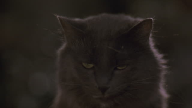 CLOSE ANGLE OF HEAD OF DARK GREY OR BLACK CAT WITH GREEN EYES. SEE HAND OF TRAINER FEED CAT. SEE CAT LOOK IN VARIOUS DIRECTIONS. SEE CAT LICK LIPS AND MEOW.