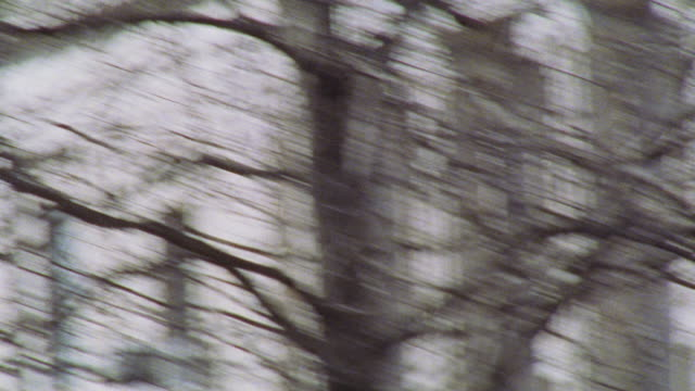 "stockvideo's en b-roll-footage met pan right to left from street signs ""pennsylvania ave"" and ""9 st."" to bare tree branches and autumn leaves. - bare tree"