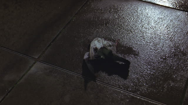 close angle of bird, pigeon dying, injured or dead on ground, cement. pavement wet from rain. walking pov. near canal, pool or pond. dead animals. city. - dead animal stock videos and b-roll footage