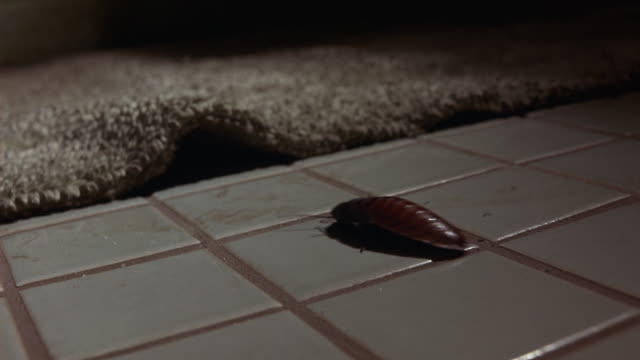 close angle of tiled bathroom floor with bathmat shows cockroach crawl across floor under rug. insects. - ゴキブリ点の映像素材/bロール