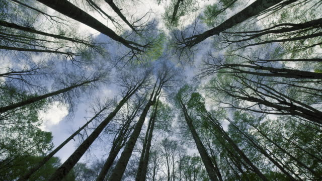 beech forest and clouds in the sky - largo descrizione generale video stock e b–roll