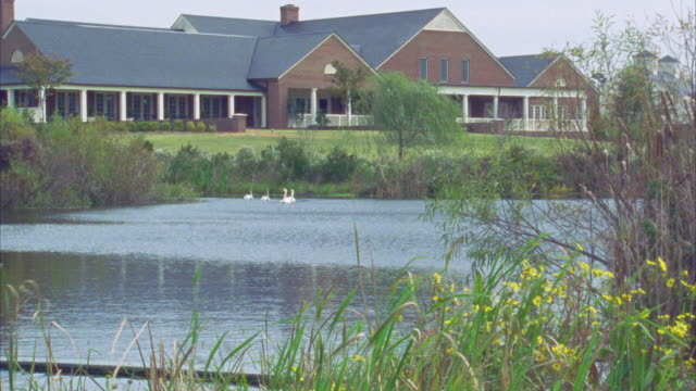 WIDE ANGLE  OF SWANS SWIMMING ON LAKE OR POND SURROUNDED BY GRASSES AND REEDS WITH SPRAWLING TWO-STORY BRICK BUILDING WITH PORCH IN BG.