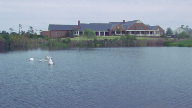 vídeos de stock e filmes b-roll de wide angle of swans swimming on lake or pond surrounded by grasses and reeds with sprawling two-story brick building with porch in bg. - comunidade de aposentados