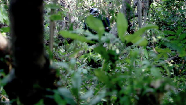 hand held of dense jungle brush. gunman in head scarf hiding behind tree. explosion kills man. soldiers in camouflage fatigues sneak toward site. - hiding stock videos and b-roll footage