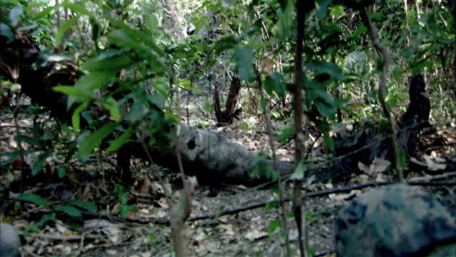 HAND HELD OF SOLDIERS IN CAMOUFLAGE FATIGUES CROUCHING IN JUNGLE OR FOREST AREA. ENEMY SOLDIER SEEN WALKING THROUGH WOODS IN DISTANCE. EXPLOSION KILLS MAN.