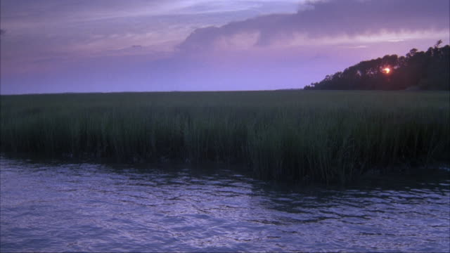 MEDIUM ANGLE OF REEDS OR PLANTS GROWING ON EDGE OR LAKE OR RIVER, POSSIBLE MARSH. SEE SETTING SUN BEHIND TREES IN BACKGROUND.