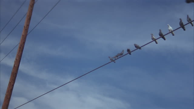 up angle of telephone wires. see several birds fly over and perch themselves on wire. pans right to see birds sitting on stretch of wire. then see flocks of birds fly past while some stray and sit on wire. - telegraph pole stock videos and b-roll footage