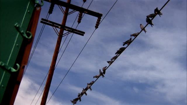 up angle of several birds sitting on a telephone wire. then see birds suddenly fly away. - telefonledning bildbanksvideor och videomaterial från bakom kulisserna