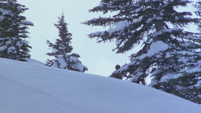 MEDIUM ANGLE OF FEMALE SKIER COMING DOWN SKI HILL. WEARING FUR HAT AND RAINBOW PATTERN JACKET.