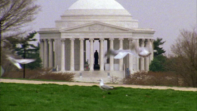 vidéos et rushes de wide angle on the jefferson memorial. see seagulls on grass in fg and flies in front of camera. barren trees suggest winter season. neoclassical architecture. - jefferson memorial