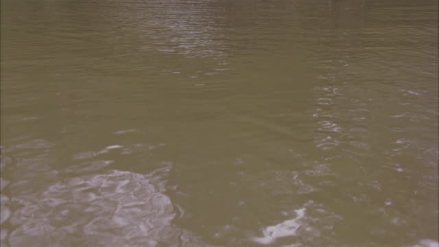 vidéos et rushes de pan up of muddy river, dock, shack. rippled, muddy water.  trees. - cahute