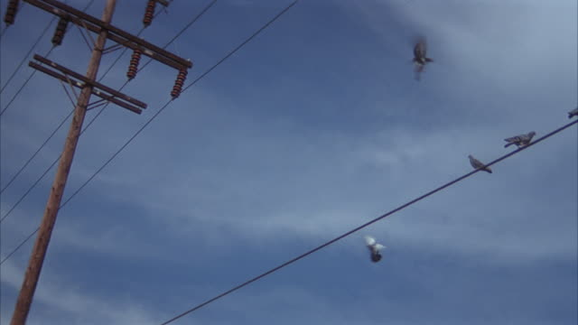 up angle of telephone wires. see birds fly over and perch themselves on wire. - wire stock videos & royalty-free footage