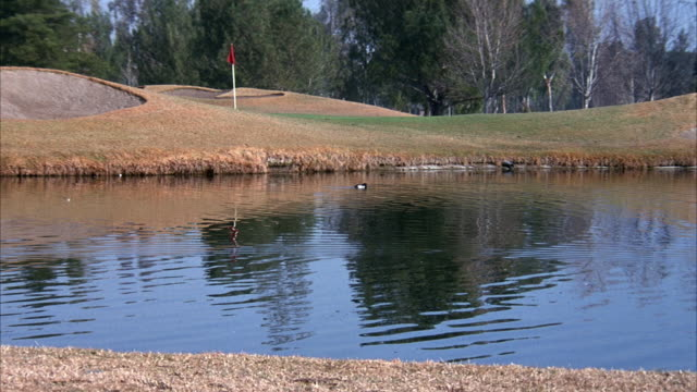 vídeos y material grabado en eventos de stock de medium angle of green and bunkers on golf course. see water in front of green with duck. see flag stick on green. - bandera de golf