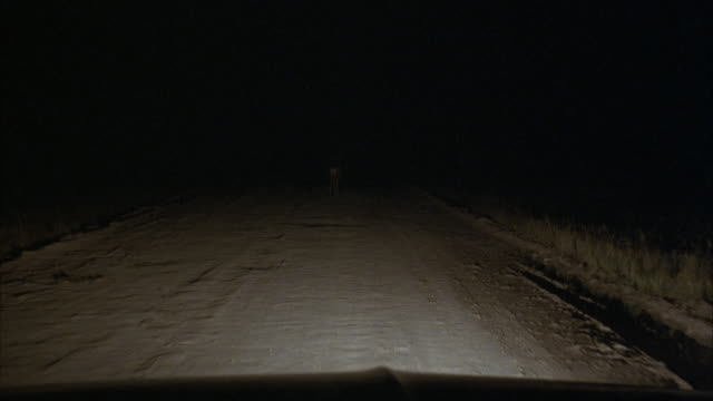 wide angle moving pov from car dashboard. car hood in foreground. car is driving down dark dirt road. buck, male deer with antlers, appears  in headlights in road. - headlight stock videos & royalty-free footage