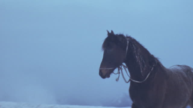 stockvideo's en b-roll-footage met handheld medium angle of brown horse trotting right to left over snow covered mountain landscape. mountain peaks in background. - paard paardachtigen