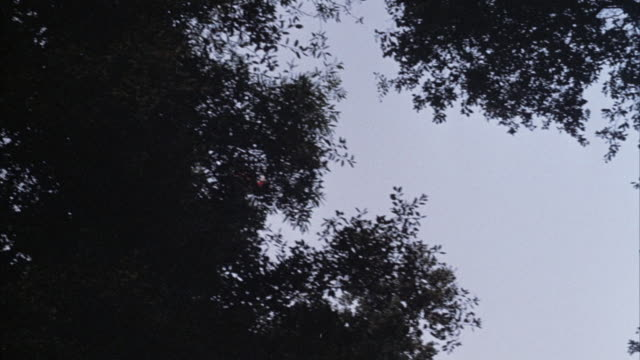 UP ANGLE OF ORANGE HELICOPTER FLYING OVERHEAD. POV IS FROM UNDER TREE CANOPY IN FOREST.