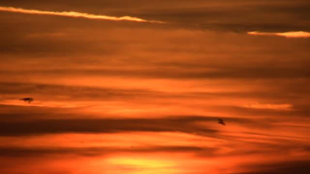 dusk birds (hd) - duck stock videos & royalty-free footage