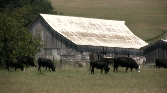 cows come home (hd) - barn stock videos & royalty-free footage
