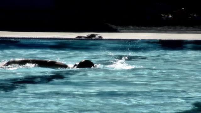 estate, nuoto v.3 (hd - piscina pubblica all'aperto video stock e b–roll