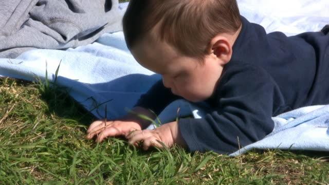 baby gras (hd - ein männliches baby allein stock-videos und b-roll-filmmaterial