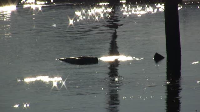 beautiful bird v.4 (hd) - water bird stock videos & royalty-free footage