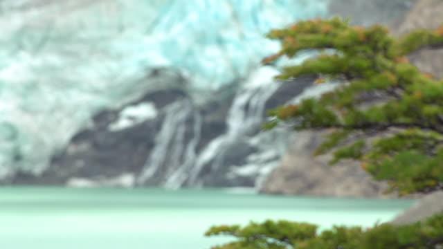 patagonia. tree and waterfall trasfoco - grundriss stock-videos und b-roll-filmmaterial