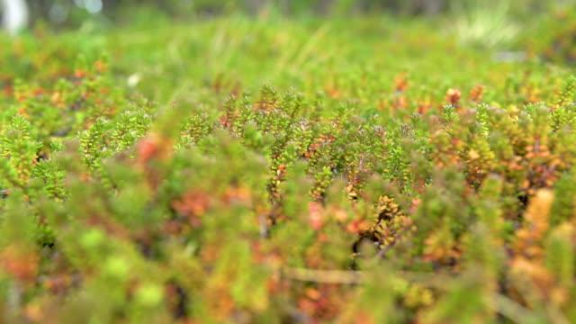 patagonia. plants - grundriss stock-videos und b-roll-filmmaterial