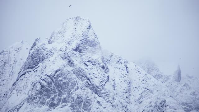 lofoten islands. snowy mountain and birds - aptenia stock-videos und b-roll-filmmaterial