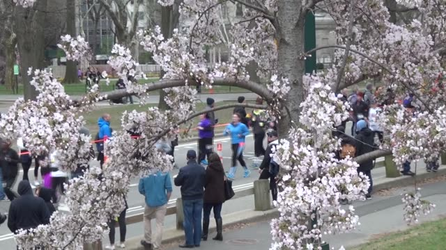 CENTRAL PARK CHERRY TREES AND RUNNERS IN RACE