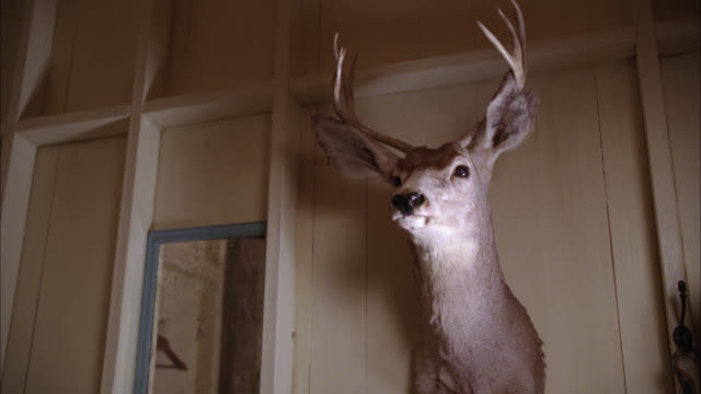 up angle of wall-mounted deer head with antlers. taxidermy. - stuffed stock videos & royalty-free footage