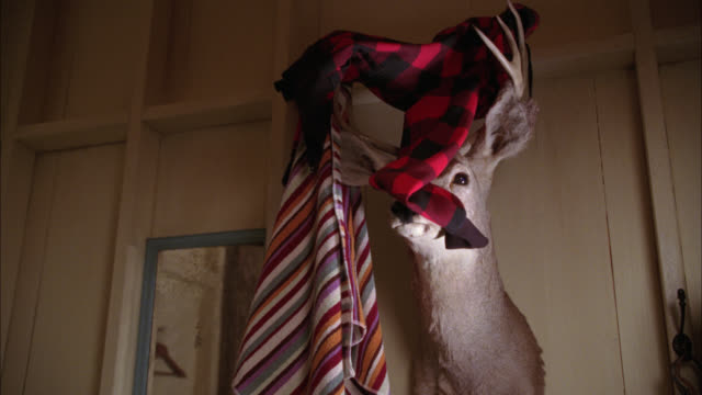 up angle of clothes thrown onto wall-mounted deer head with antlers. taxidermy. - stuffed stock videos & royalty-free footage