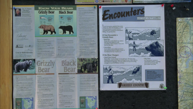 vídeos y material grabado en eventos de stock de close angle of pamphlets and information charts on a bulletin board about grizzly and black bears. could be in national park or tourist information center. - diagrama